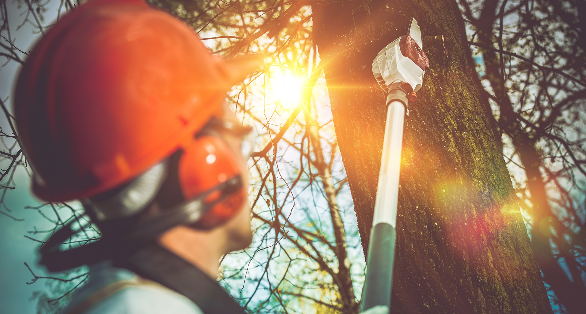 Tree Removal, Tree Trimming, Tree Service