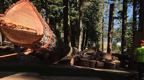 Professional Land Clearing, Brush Clearing, Fire Fuel Abatement