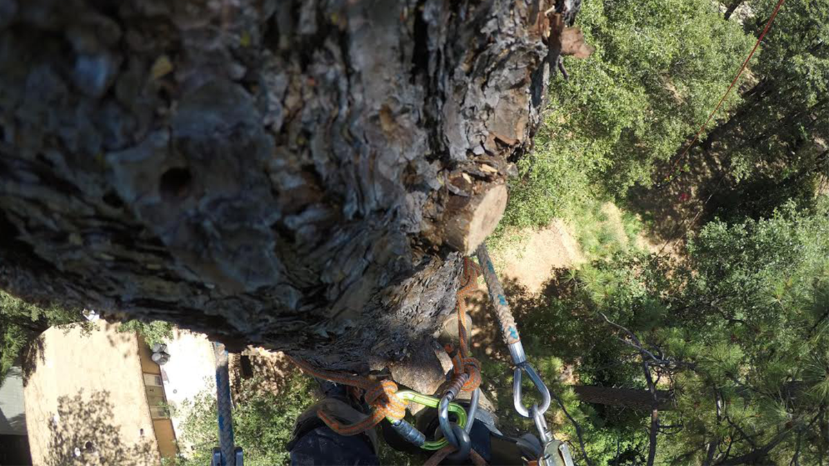 Big Tree Removal, Yuba City, Arborists